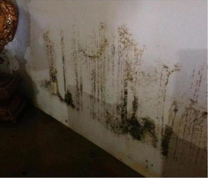 Mold Remediation Why You Must Consider Mold Problems