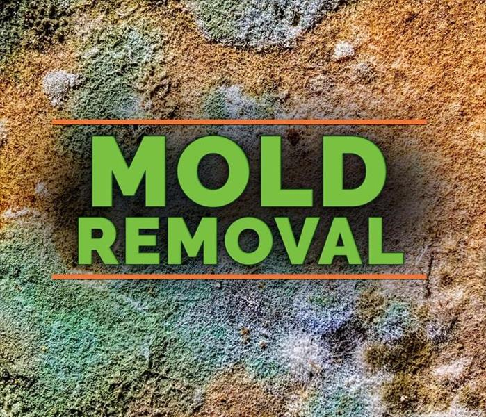 Mold Remediation 3 Facts About Mold Remediation Costs